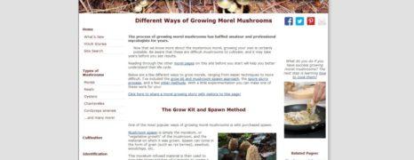 Morel Mushrooms Grown at Home